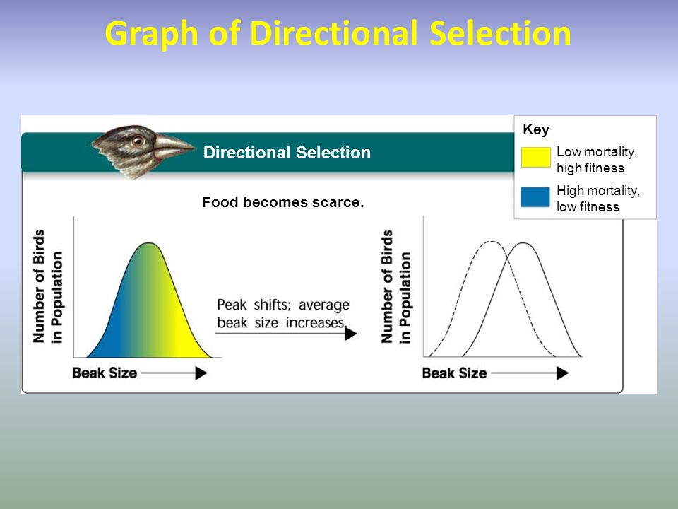 Graph of Directional Selection