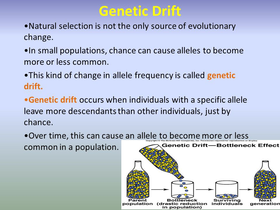 Genetic Drift Natural selection is not the only source of evolutionary change.