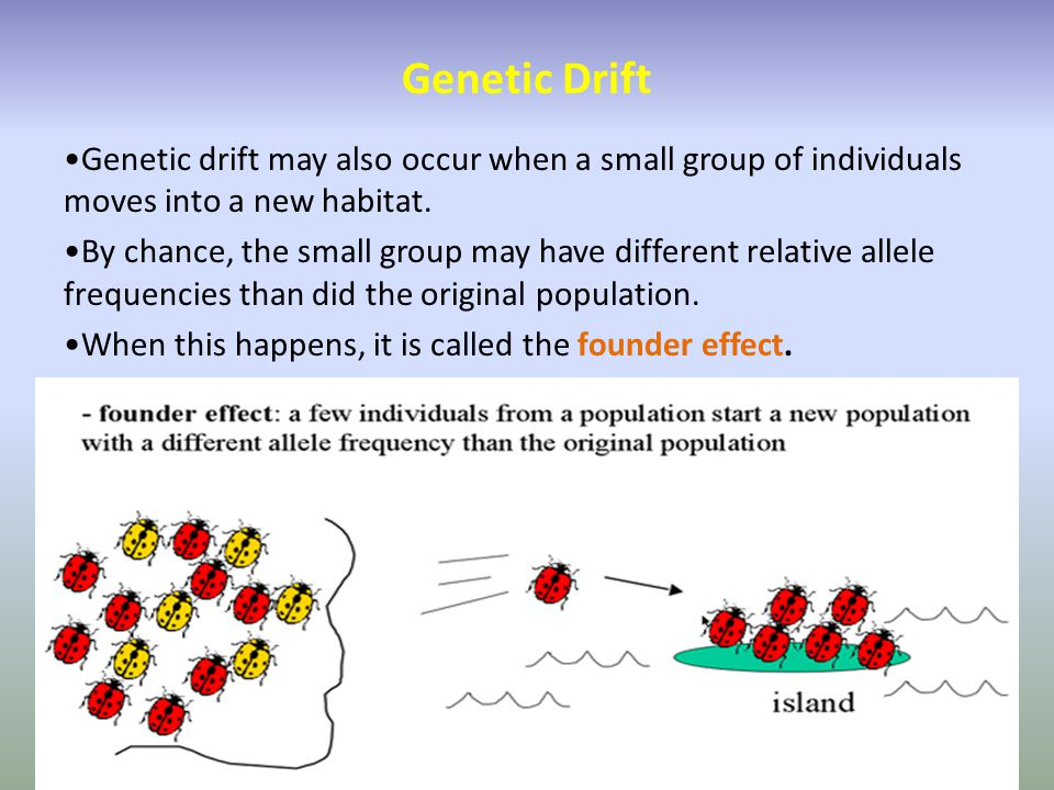 Genetic Drift Genetic drift may also occur when a small group of individuals moves into a new habitat.