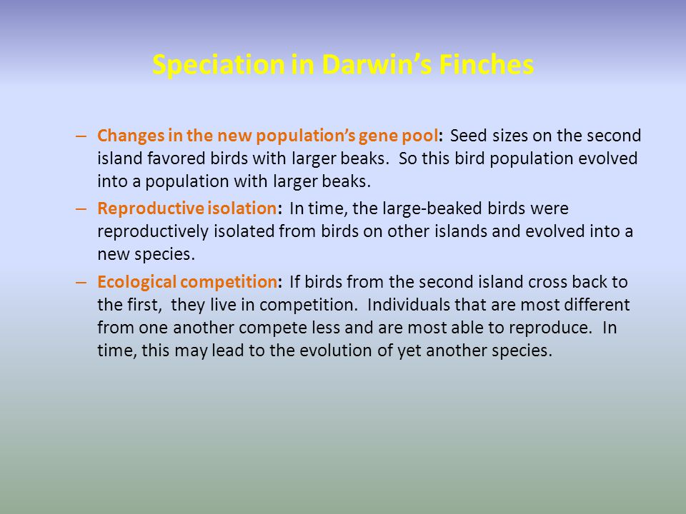 Speciation in Darwin's Finches