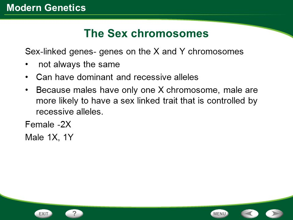 The Sex chromosomes Sex-linked genes- genes on the X and Y chromosomes