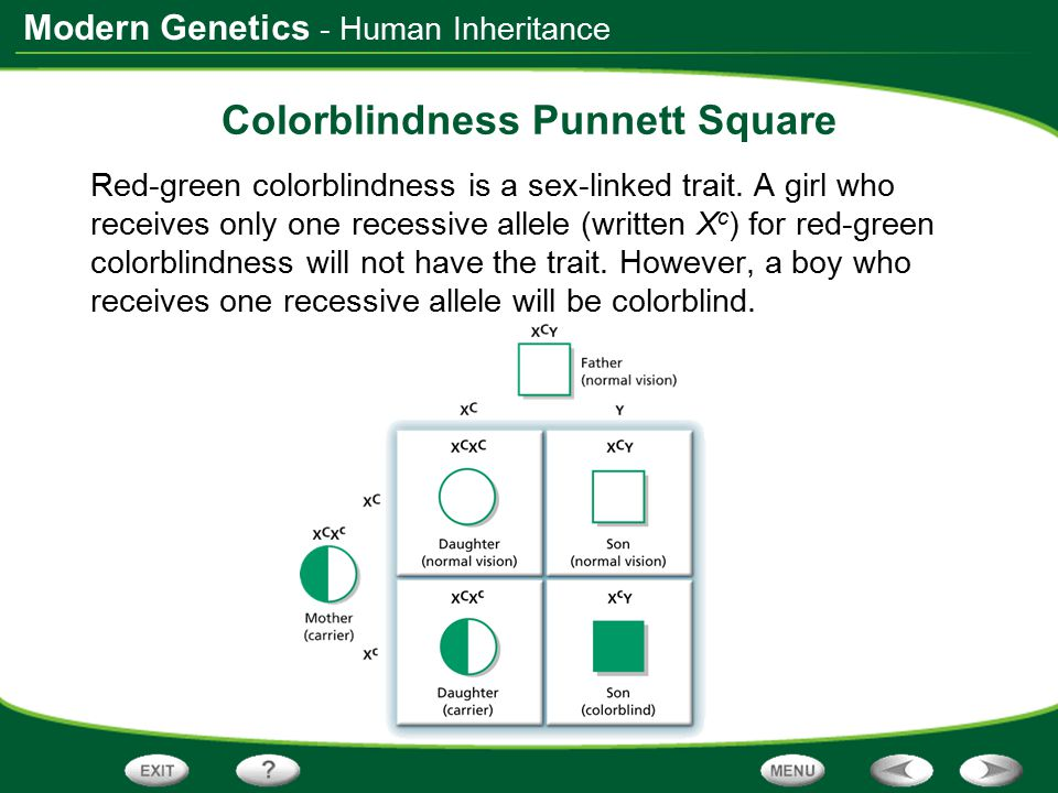 Colorblindness Punnett Square