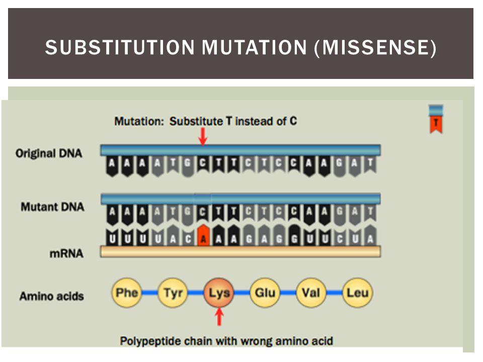Substitution mutation (missense)