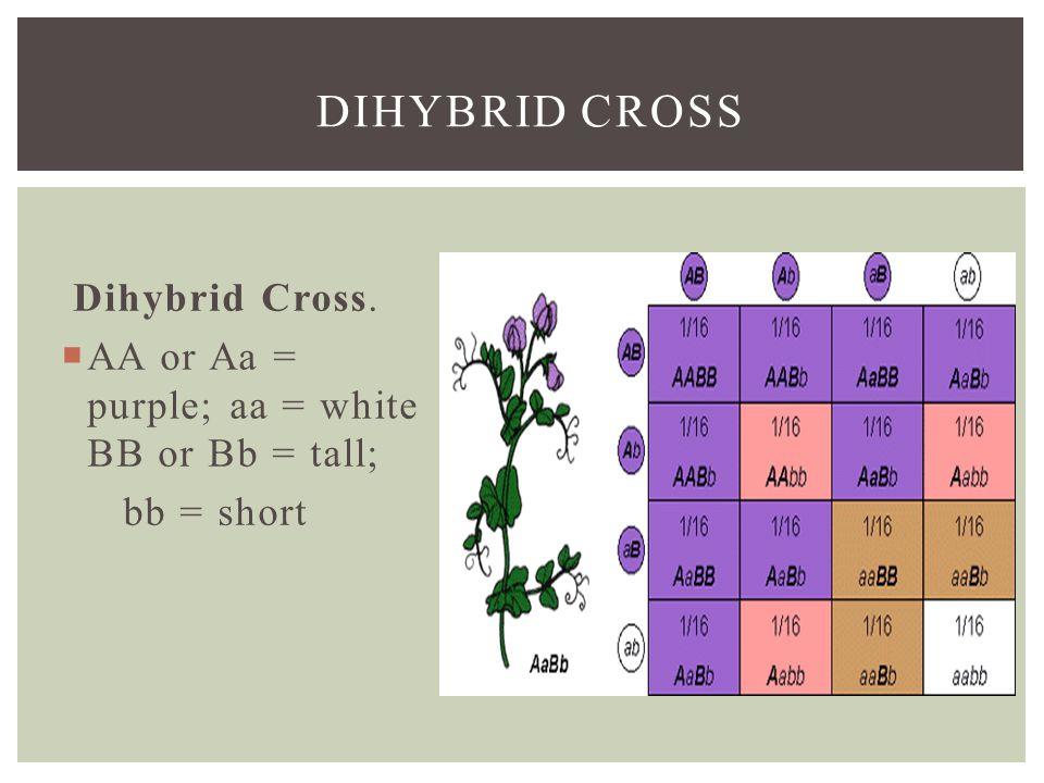 DIHYBRID CROSS Dihybrid Cross.