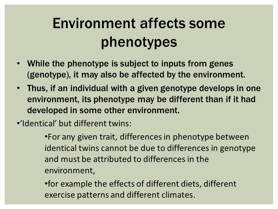 environment and phenotype Define phenotype: the observable properties of an organism that are produced by the interaction of the genotype and the environment.