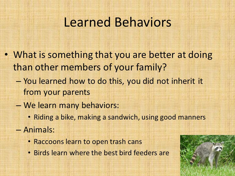 Learned Behaviors What is something that you are better at doing than other members of your family
