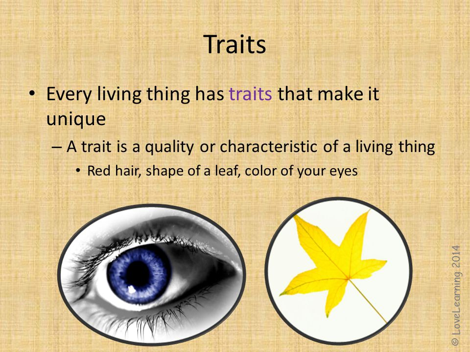 Traits Every living thing has traits that make it unique