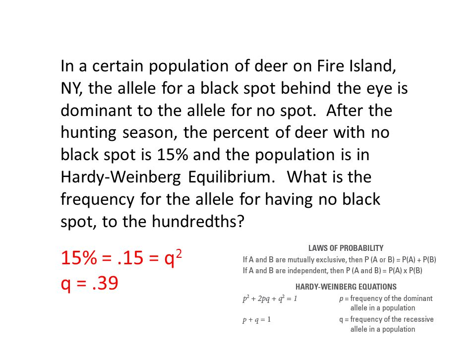 In a certain population of deer on Fire Island, NY, the allele for a black spot behind the eye is dominant to the allele for no spot. After the hunting season, the percent of deer with no black spot is 15% and the population is in Hardy-Weinberg Equilibrium. What is the frequency for the allele for having no black spot, to the hundredths
