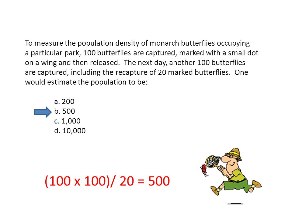 To measure the population density of monarch butterflies occupying