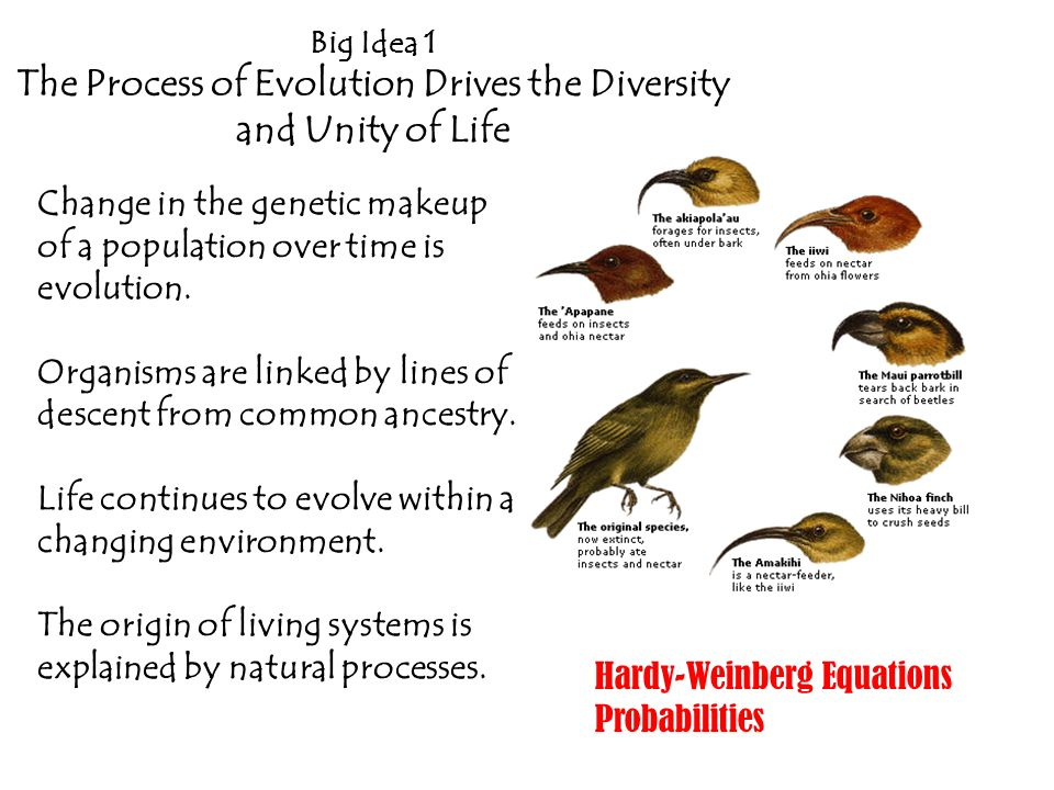 The Process of Evolution Drives the Diversity and Unity of Life
