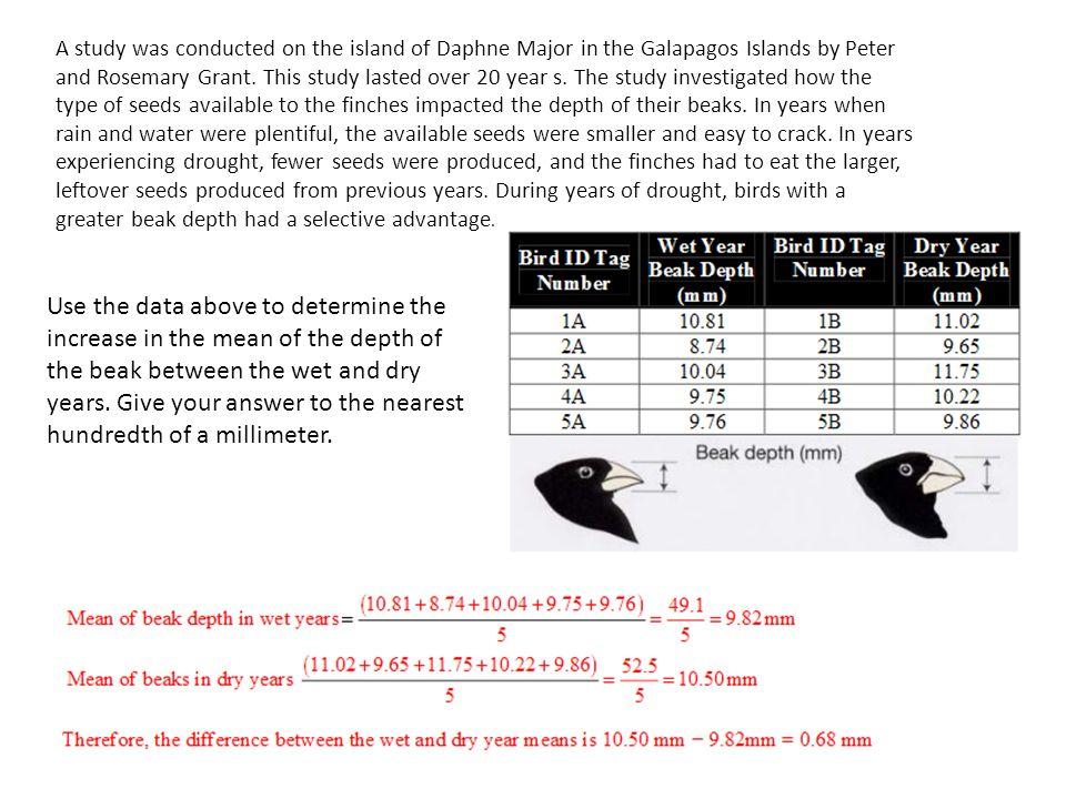 A study was conducted on the island of Daphne Major in the Galapagos Islands by Peter and Rosemary Grant. This study lasted over 20 year s. The study investigated how the type of seeds available to the finches impacted the depth of their beaks. In years when rain and water were plentiful, the available seeds were smaller and easy to crack. In years experiencing drought, fewer seeds were produced, and the finches had to eat the larger, leftover seeds produced from previous years. During years of drought, birds with a greater beak depth had a selective advantage.