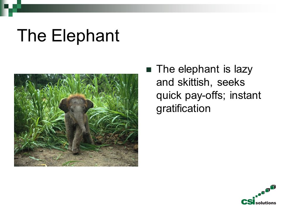 The Elephant The elephant is lazy and skittish, seeks quick pay-offs; instant gratification