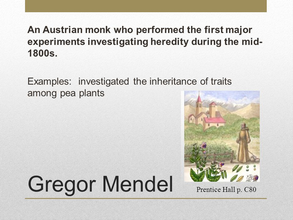 An Austrian monk who performed the first major experiments investigating heredity during the mid-1800s. Examples: investigated the inheritance of traits among pea plants