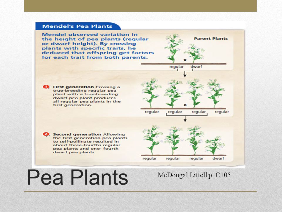 Pea Plants McDougal Littell p. C105