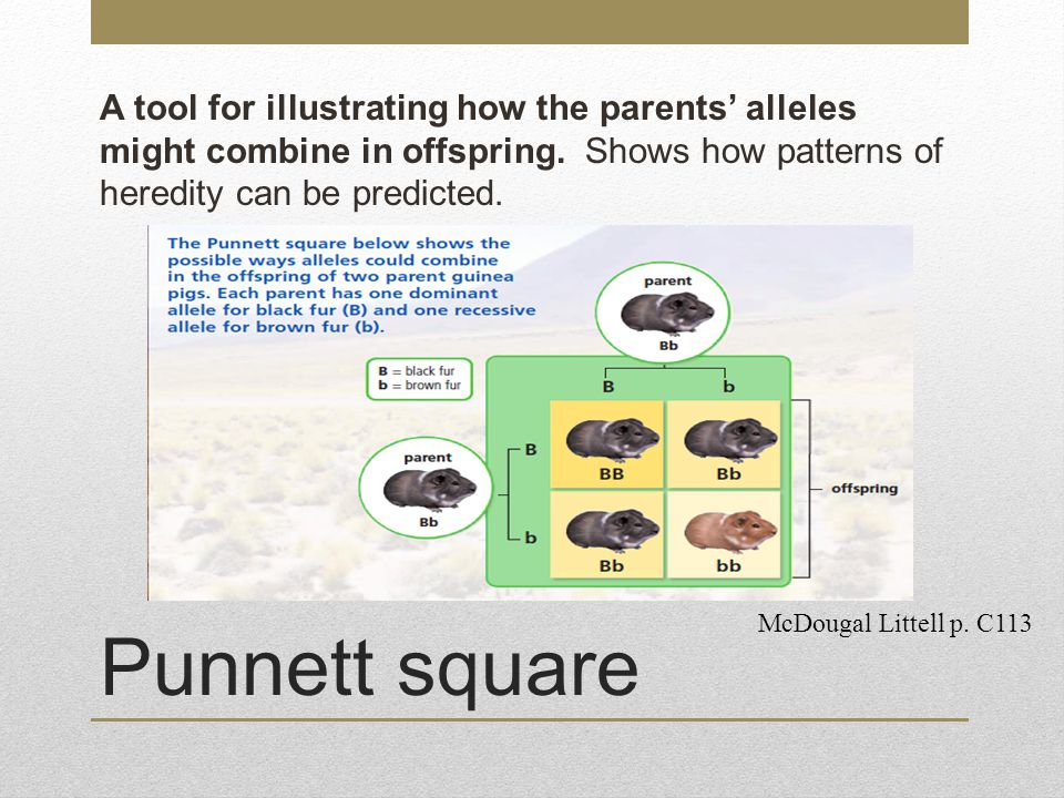 A tool for illustrating how the parents' alleles might combine in offspring. Shows how patterns of heredity can be predicted.