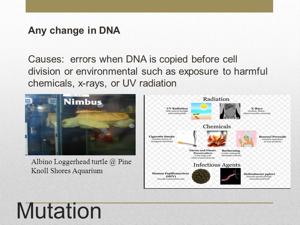Any change in DNA Causes: errors when DNA is copied before cell division or environmental such as exposure to harmful chemicals, x-rays, or UV radiation