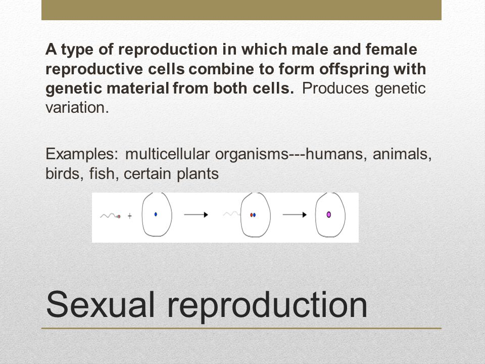 A type of reproduction in which male and female reproductive cells combine to form offspring with genetic material from both cells. Produces genetic variation. Examples: multicellular organisms---humans, animals, birds, fish, certain plants