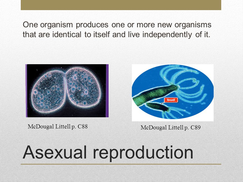 One organism produces one or more new organisms that are identical to itself and live independently of it.