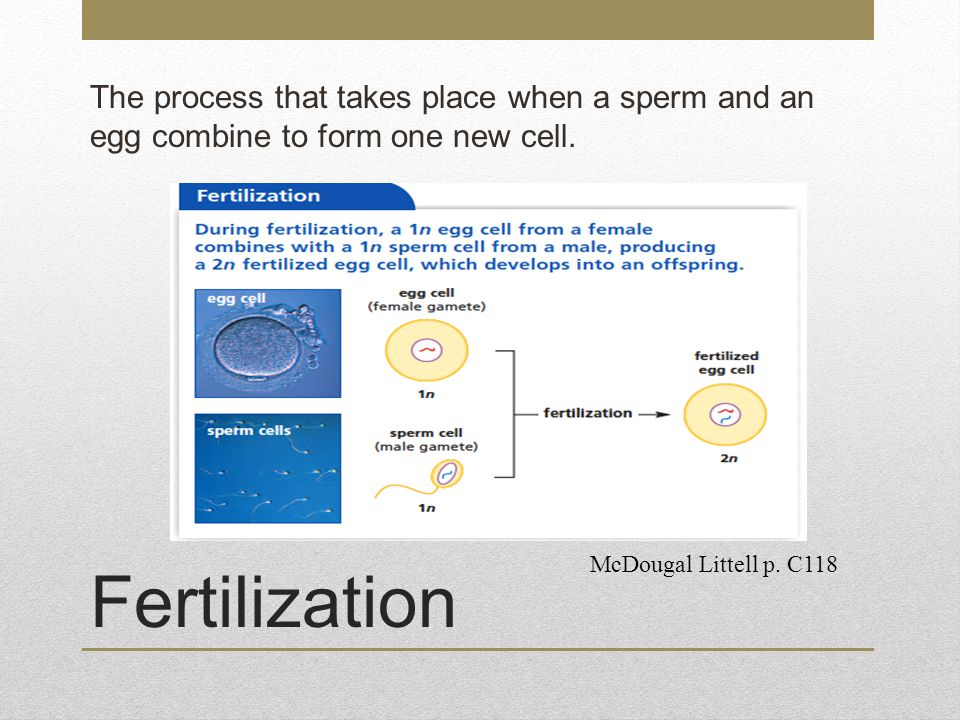 The process that takes place when a sperm and an egg combine to form one new cell.