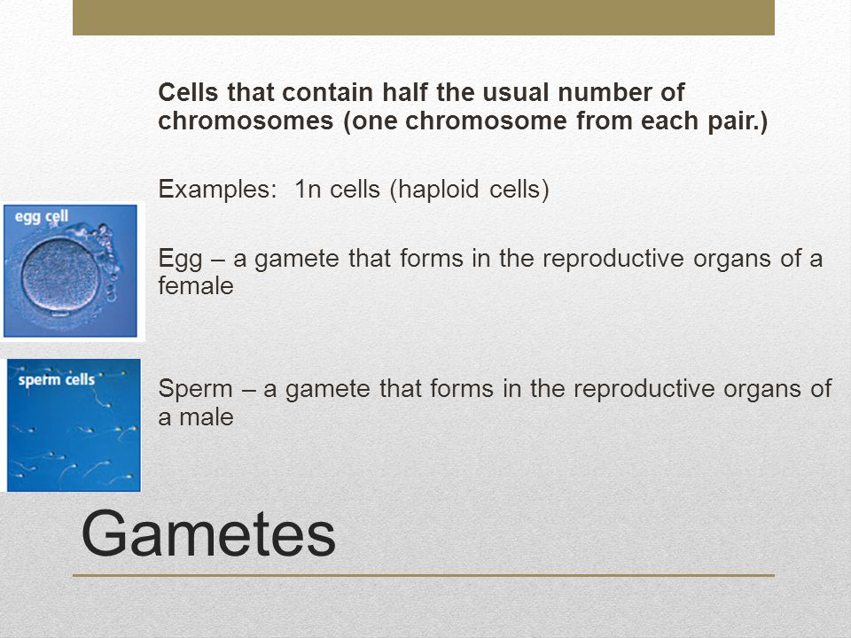 Cells that contain half the usual number of chromosomes (one chromosome from each pair.) Examples: 1n cells (haploid cells) Egg – a gamete that forms in the reproductive organs of a female Sperm – a gamete that forms in the reproductive organs of a male