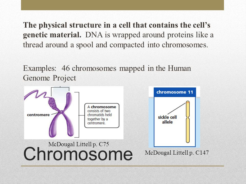 The physical structure in a cell that contains the cell's genetic material. DNA is wrapped around proteins like a thread around a spool and compacted into chromosomes. Examples: 46 chromosomes mapped in the Human Genome Project