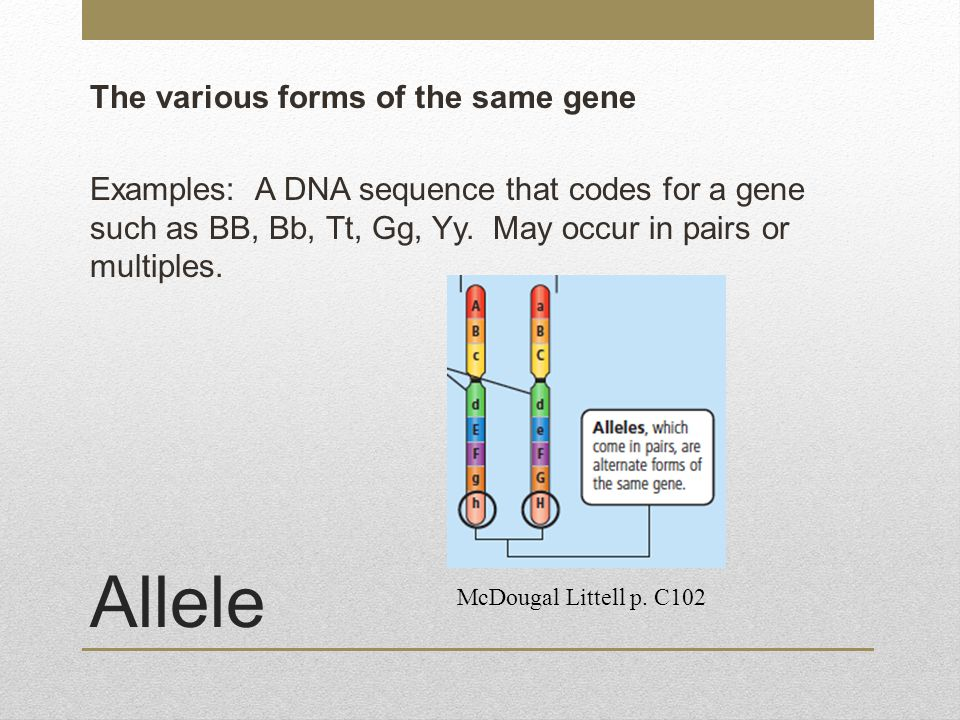The various forms of the same gene Examples: A DNA sequence that codes for a gene such as BB, Bb, Tt, Gg, Yy. May occur in pairs or multiples.