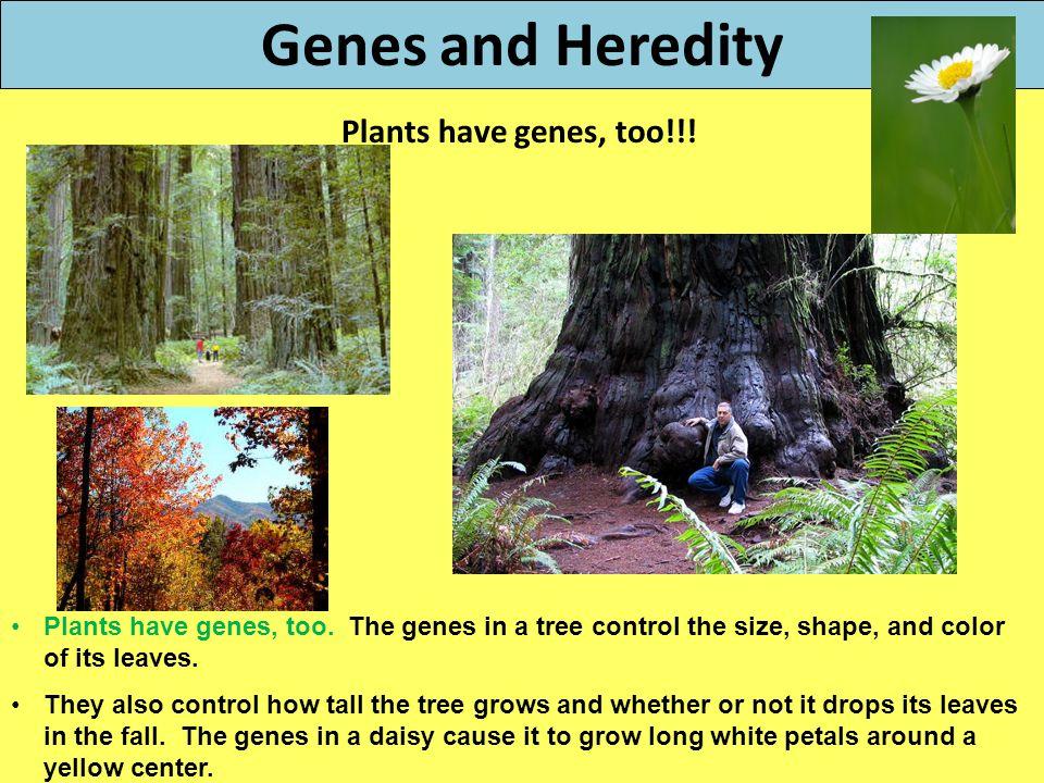 Genes and Heredity Plants have genes, too!!!