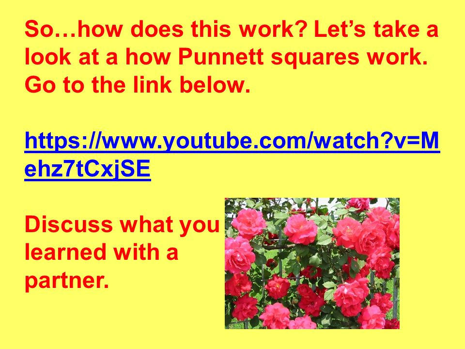 So…how does this work. Let's take a look at a how Punnett squares work
