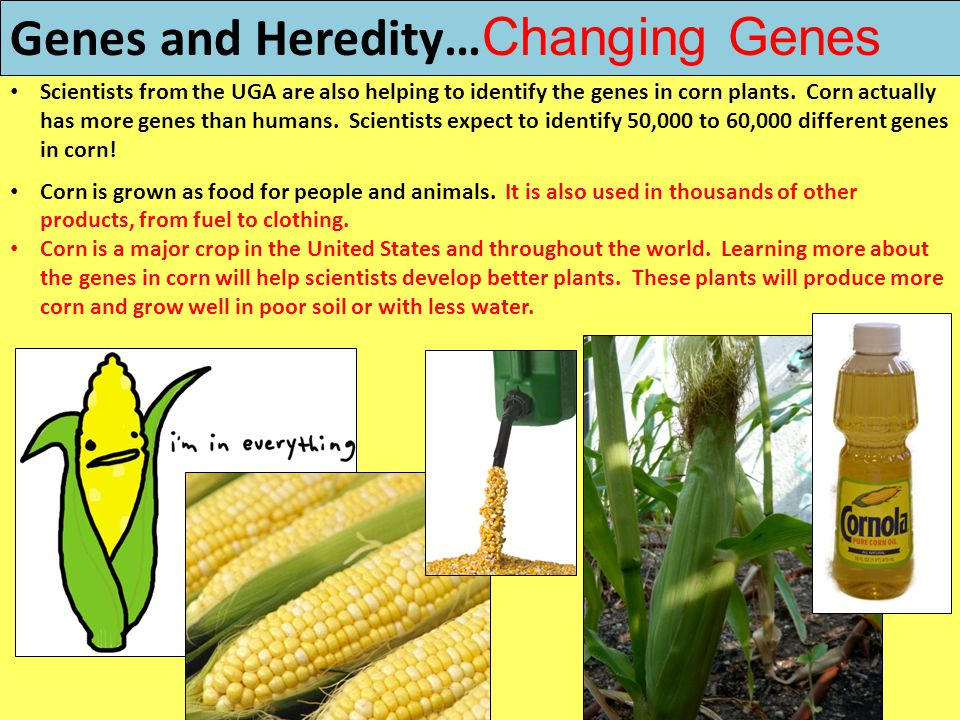 Genes and Heredity…Changing Genes