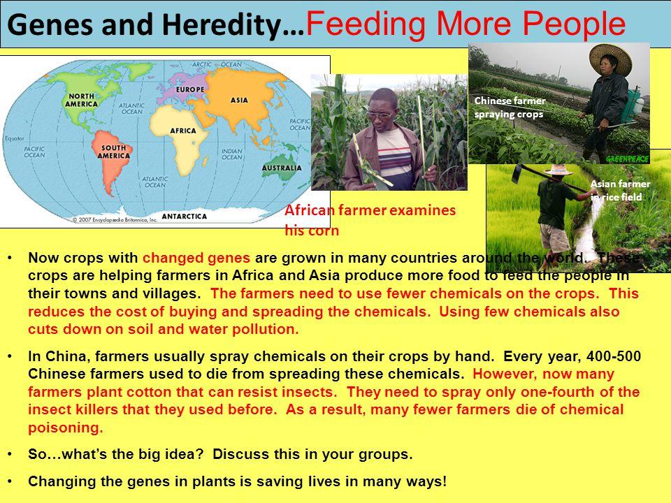 Genes and Heredity…Feeding More People