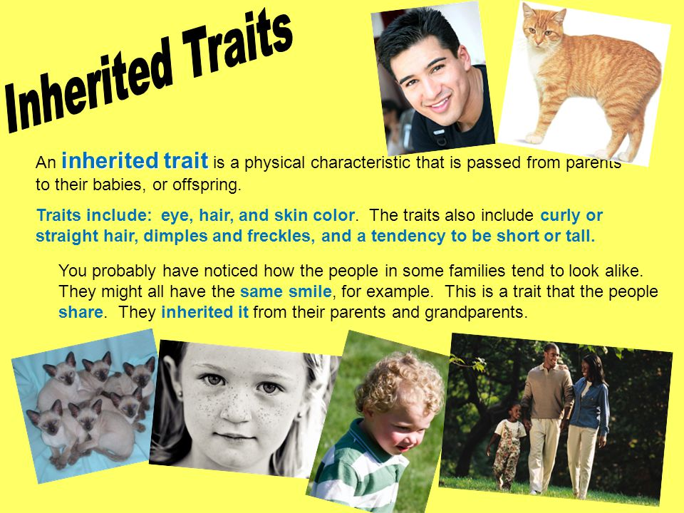 Inherited Traits An inherited trait is a physical characteristic that is passed from parents to their babies, or offspring.