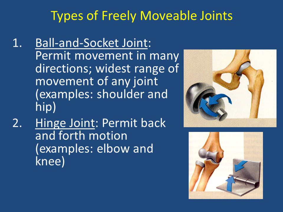 Types of Freely Moveable Joints
