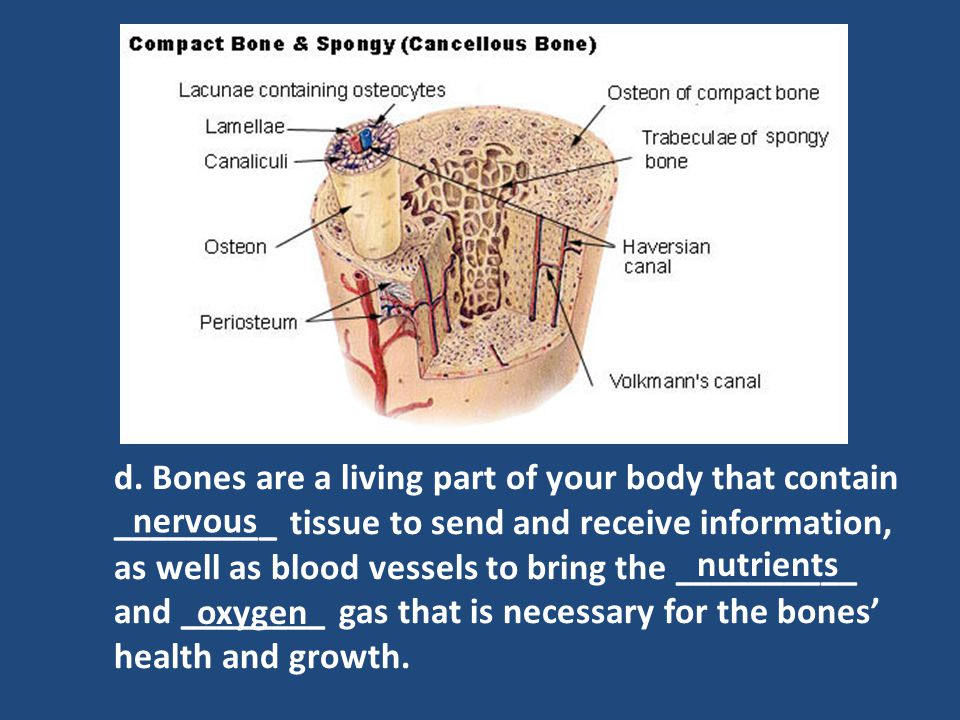 d. Bones are a living part of your body that contain _________ tissue to send and receive information, as well as blood vessels to bring the __________ and ________ gas that is necessary for the bones' health and growth.