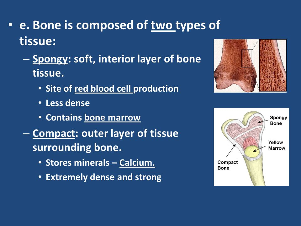 e. Bone is composed of two types of tissue: