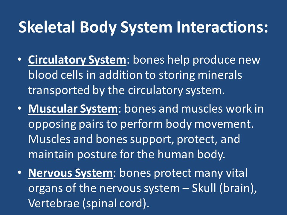 Skeletal Body System Interactions: