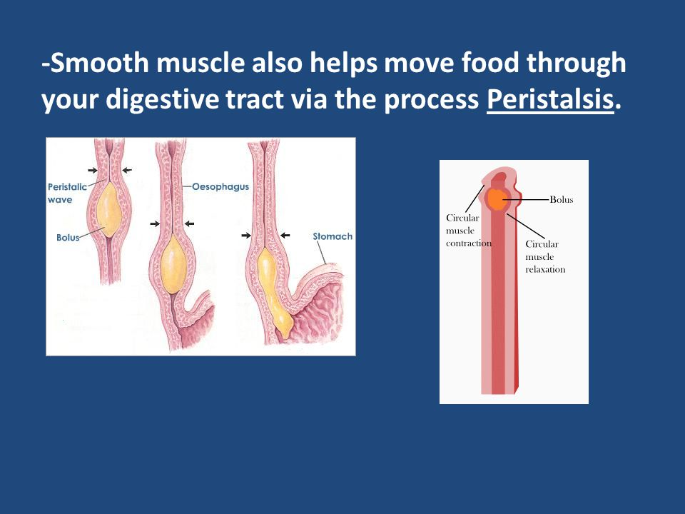 -Smooth muscle also helps move food through your digestive tract via the process Peristalsis.