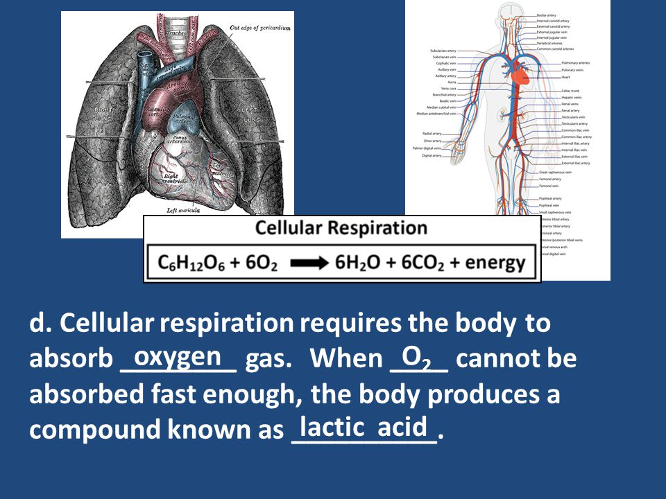 d. Cellular respiration requires the body to absorb ________ gas