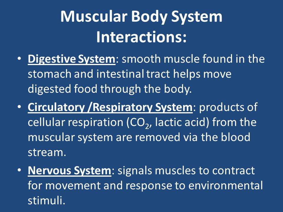 Muscular Body System Interactions: