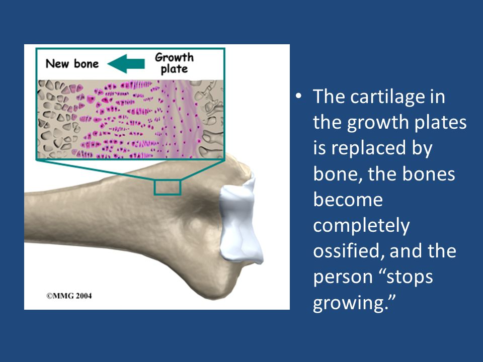 The cartilage in the growth plates is replaced by bone, the bones become completely ossified, and the person stops growing.