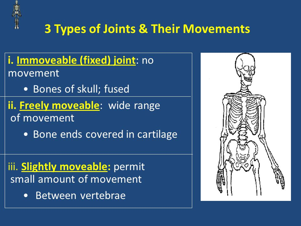 3 Types of Joints & Their Movements