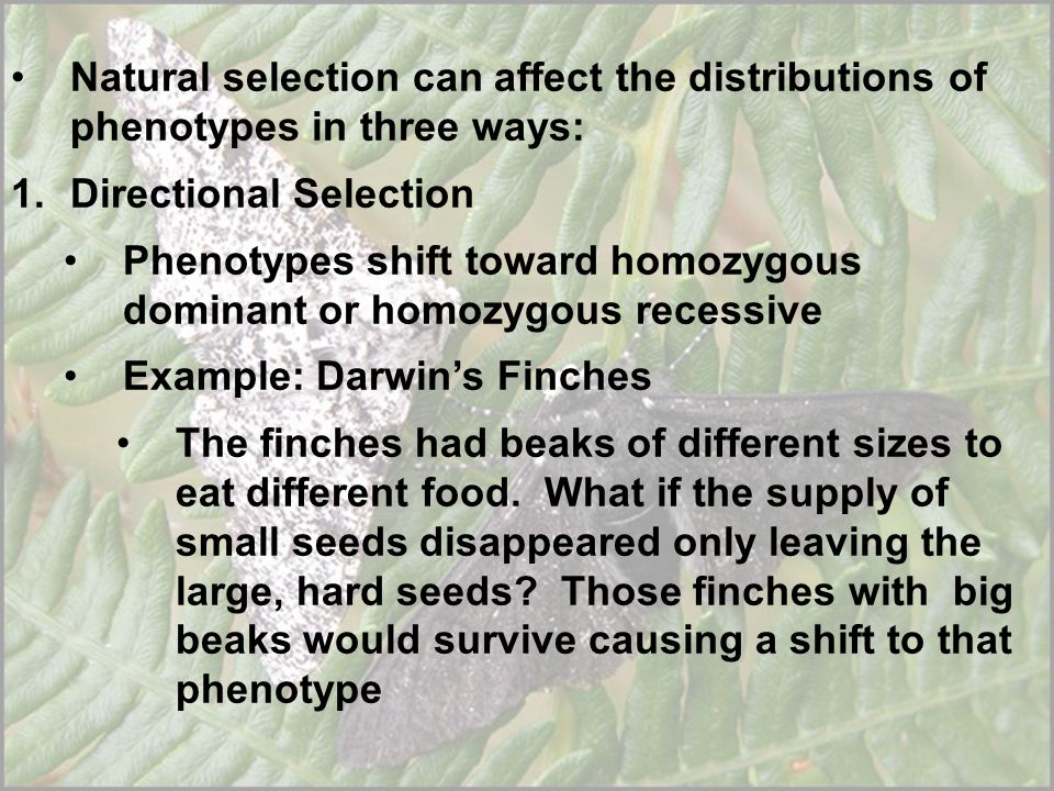 Natural selection can affect the distributions of phenotypes in three ways: