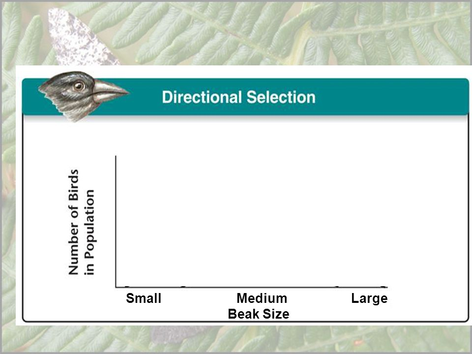Small Medium Large Beak Size