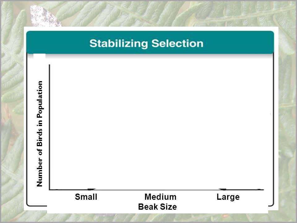 Small Medium Large Beak Size Number of Birds in Population Beak Size