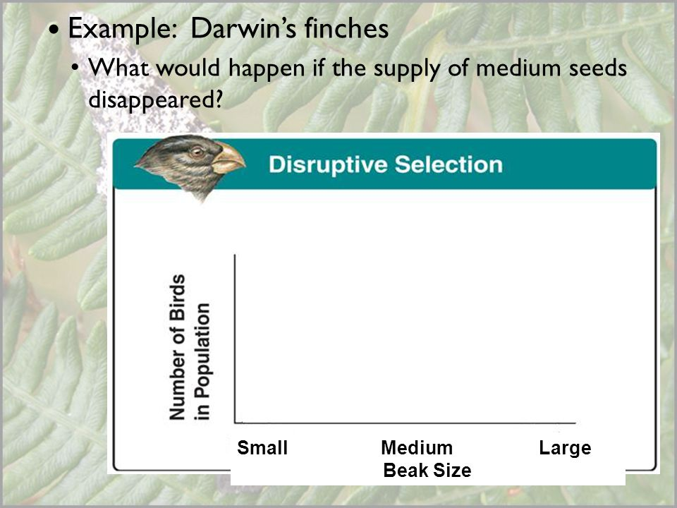 Example: Darwin's finches