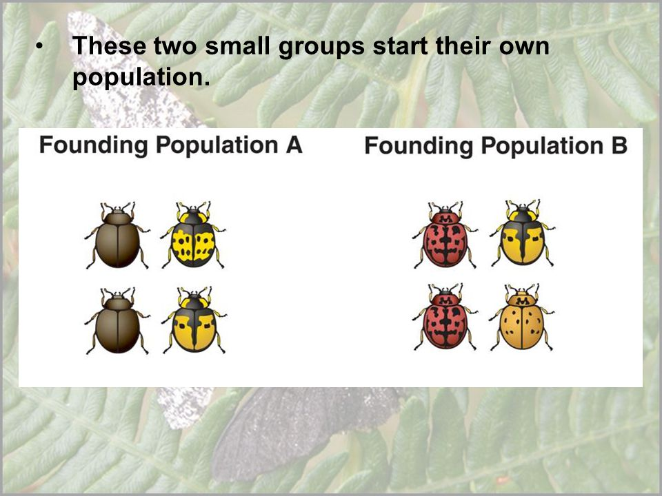 These two small groups start their own population.