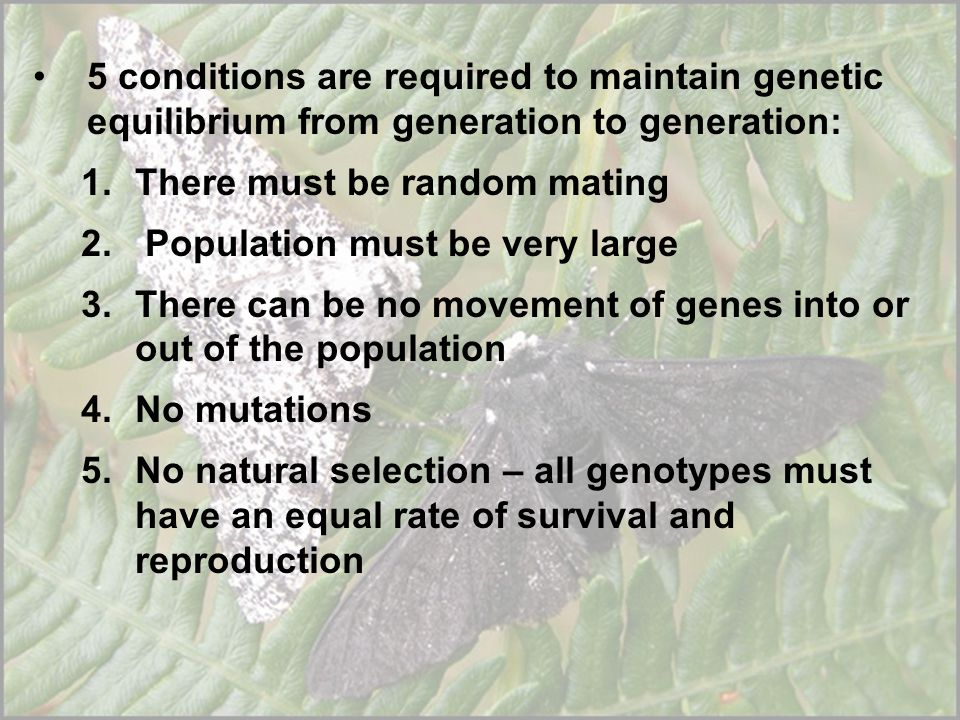 5 conditions are required to maintain genetic equilibrium from generation to generation: