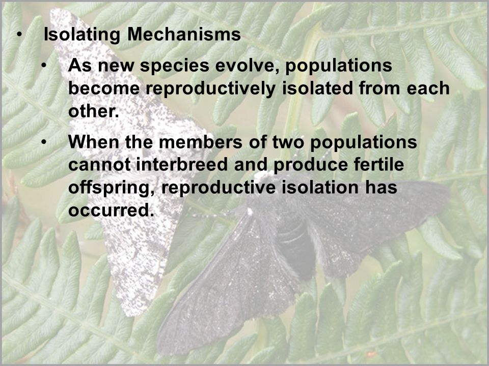 Isolating Mechanisms As new species evolve, populations become reproductively isolated from each other.
