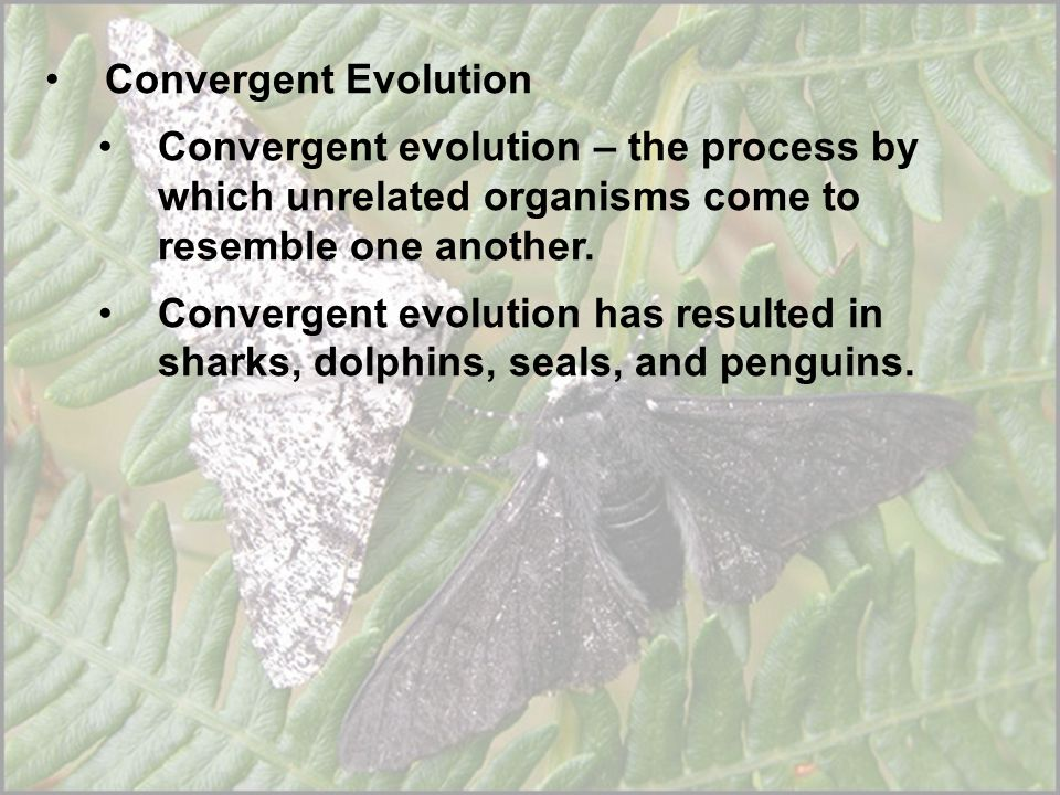Convergent Evolution Convergent evolution – the process by which unrelated organisms come to resemble one another.