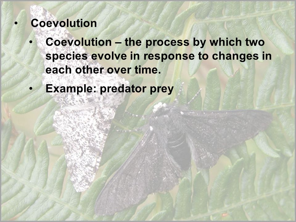 Coevolution Coevolution – the process by which two species evolve in response to changes in each other over time.