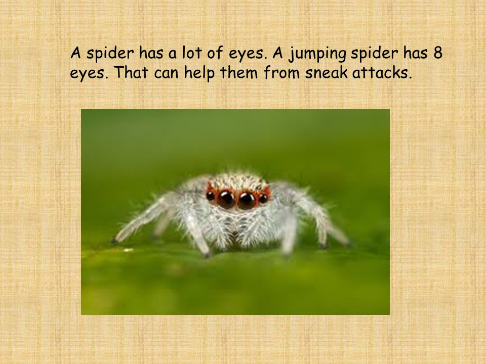 A spider has a lot of eyes. A jumping spider has 8 eyes